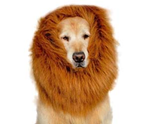 melena de leon para perro