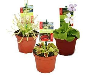 3 Plantas Carnívoras
