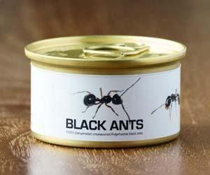 Hormigas negras comestibles