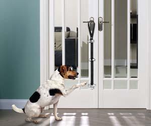 timbre para perros