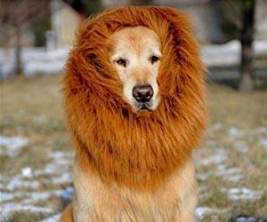 Bufanda Melena de León para Perro