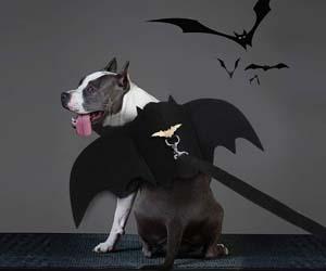 Alas de Perro para Halloween